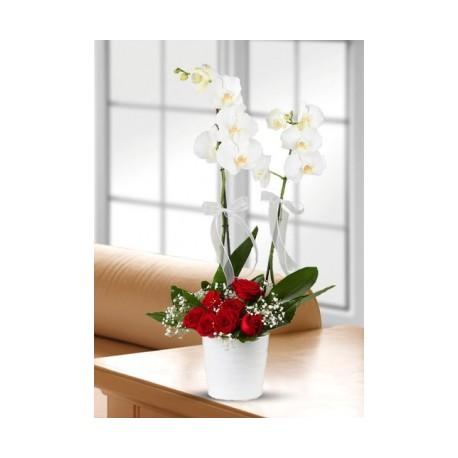 Orkideli gül aranjmanı